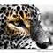 leopard-Eye