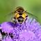 Bee Butt: