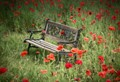 Bench among the Poppies
