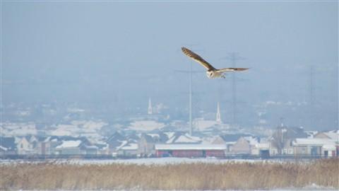 2013-01-21 GSL Wetlands 226