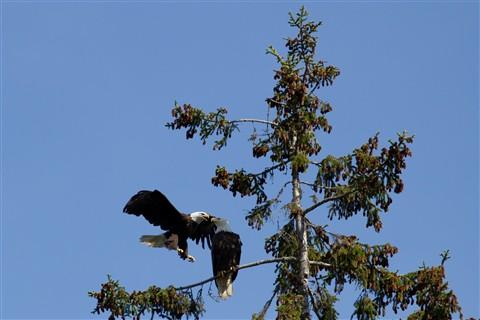 2 Eagles-7634
