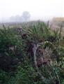 fogy autumn