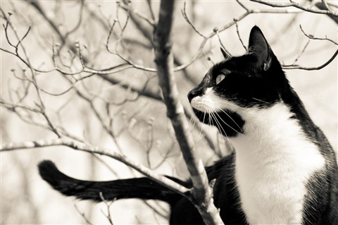 Snickers in tree 2 b&w