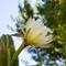 Cactus Flowers-2