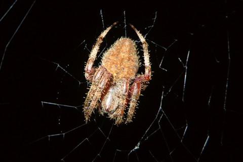 SpiderWeb_Surprise