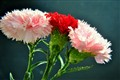 Beautiful Carnations