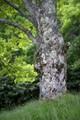I'm Lichen this Tree (Original)