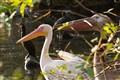 Birds listening carefully