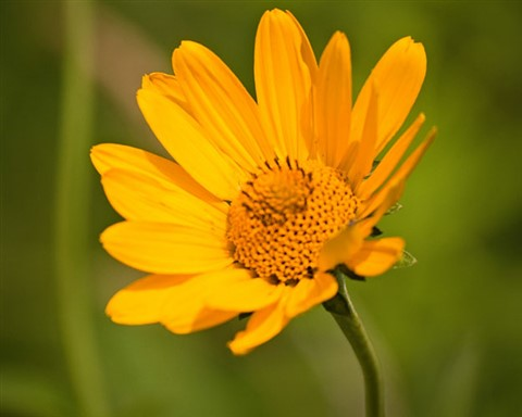 Yellow Flower-1040696