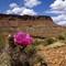 Cactus_Monument_UpperGlenCanyon_2_050814_3_2_900px_reduced