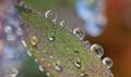 Frosty Morning Dew