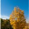 Autumn_Catskill_State_Park