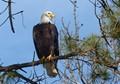 Eagle_1090660
