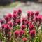 Mt Ranier field of flowers