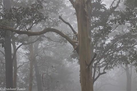 Mist @ Nagarhole
