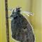 butterfly10-08-20-5360b