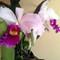 orquids2