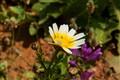 greek island flora...