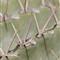 UCR_Bot_Gardens_022_web