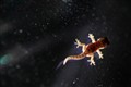 Gecko on car's front light