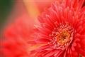 Bloom.....