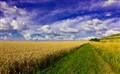 Badbury Wheatfield