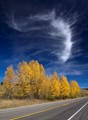 Cirrus clouds above a roadside grove of aspen trees in Grand Teton National Park, USA.