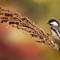 Autumn Chickadee #2