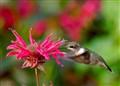 Seeking Nectars