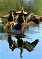 Water Mirror...