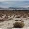 Desert Palms CA