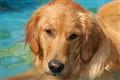 Lola - Wading pool