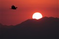 Vulture in Mexican mountain sunset