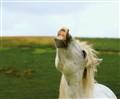 Noisy horse