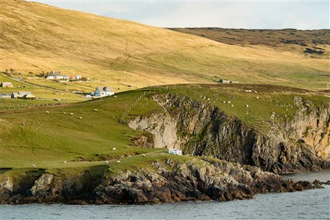 Shetland Islands: Sheep and Cliffs