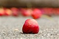 Crabapple on sidewalk