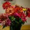 flowers - good focus-20140923 - 2047