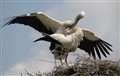 Storks in Love