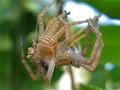 A Sixteen-legged Spider?