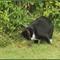 El Gato Harry 3