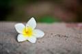 Flower/Focus