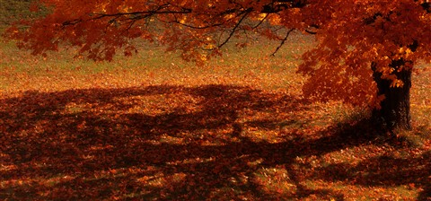 A Perfect Fall Canopy