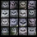 Gorilla noses