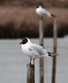 I think it is a common term, photographed at brown-sea island.