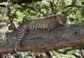 Tanzania_Leopard_2012