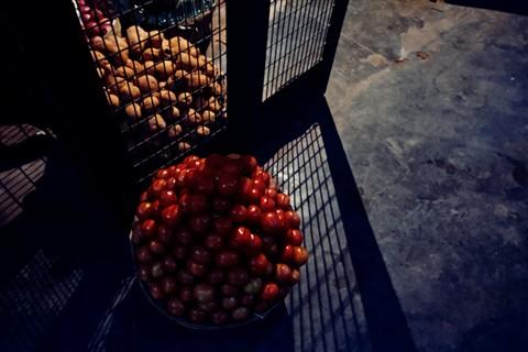 Caged veggies 4