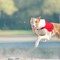 2018-10-20 - Internationale Herfstcoursing Ronostrand (NL) DSC08050