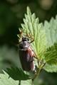Brown bug (or something ;-) )