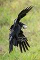 Birdie, Eagle or Albatross?