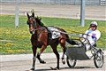 Harness Racing at Local Racino